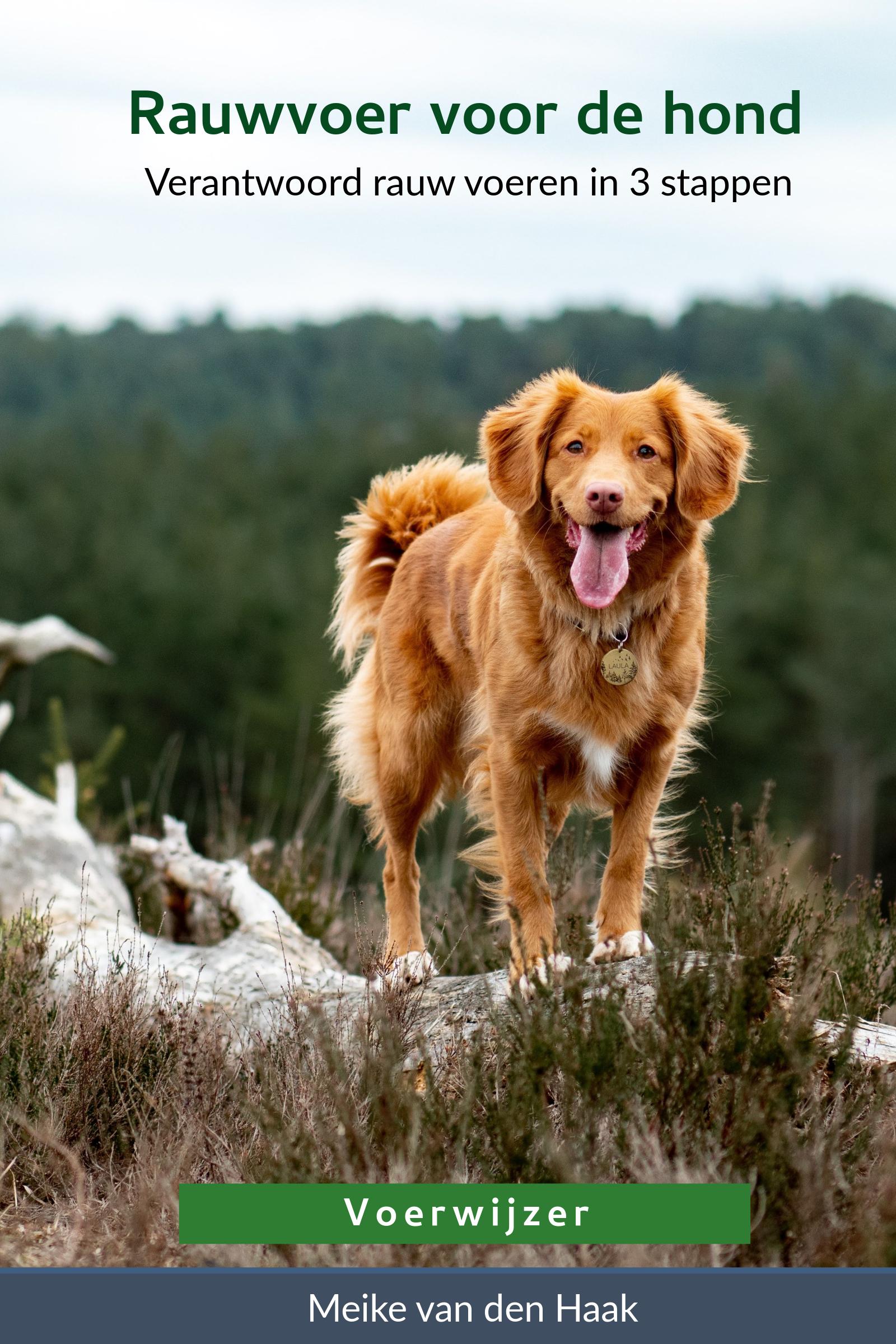 Voorkant boek Rauwvoer voor de Hond van Voerwijzer